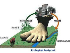 Sustainable Foot